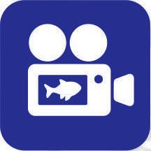 logofish